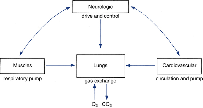 Block Diagram Of Respiratory System Wiring Diagram For Light Switch