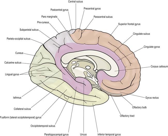 Functional Neuroanatomy Clinical Gate