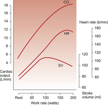 effects exercise cardiac output The effects of smoking on the cardiac output at rest and during exercise in patients with healed myocardial infarction research output: contribution to journal  article.