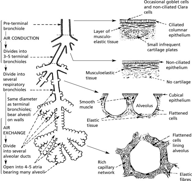 Respiratory System Clinical Gate