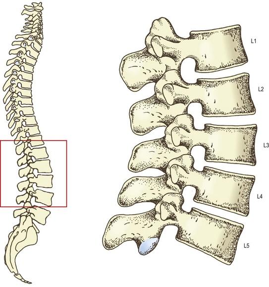 the lumbar vertebrae   clinical gate, Human Body