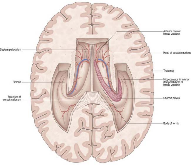 Ventricular System And Cerebrospinal Fluid Clinical Gate