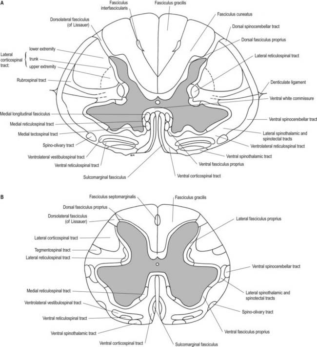 Spinal Cord And Nerve Roots Clinical Gate