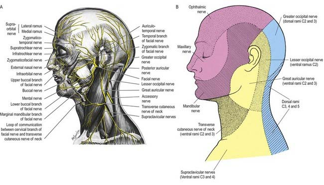 Cranial Nerves | Clinical Gate