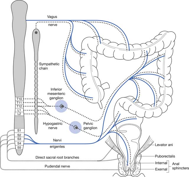 Neurogenic bowel management in adults with spinal cord injury