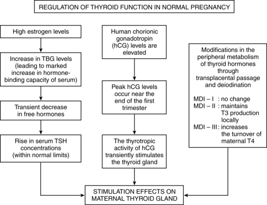 Pituitary Adrenal And Thyroid Function Clinical Gate