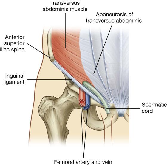 Abdomen Clinical Gate