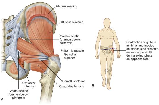 Lower Limb | Clinical Gate