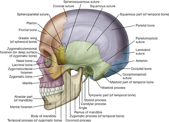 head and neck | clinical gate, Human body
