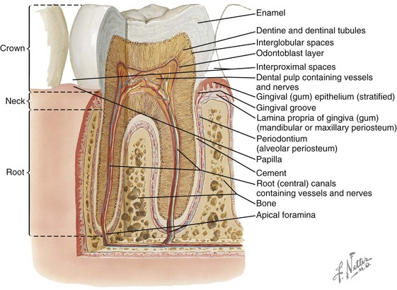 Periodontal Considerations in the Evaluation and Treatment of ...