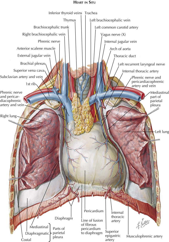 1. Anatomy | Clinical Gate