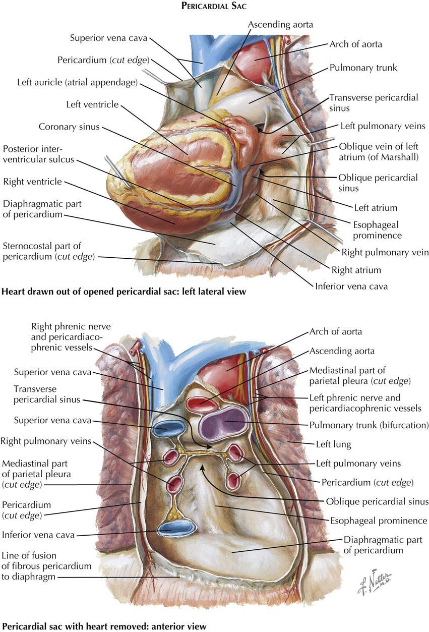 Tolle Aorta Zweige Fotos - Anatomie Ideen - finotti.info