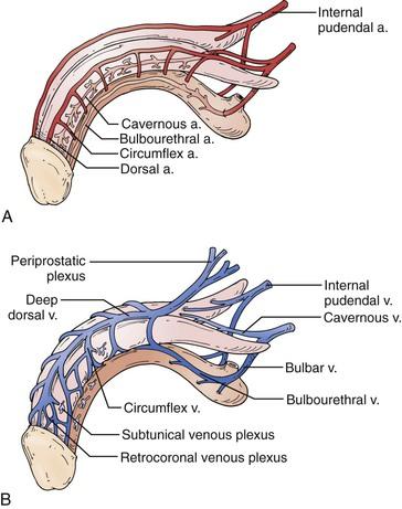 Erectile Dysfunction Clinical Gate