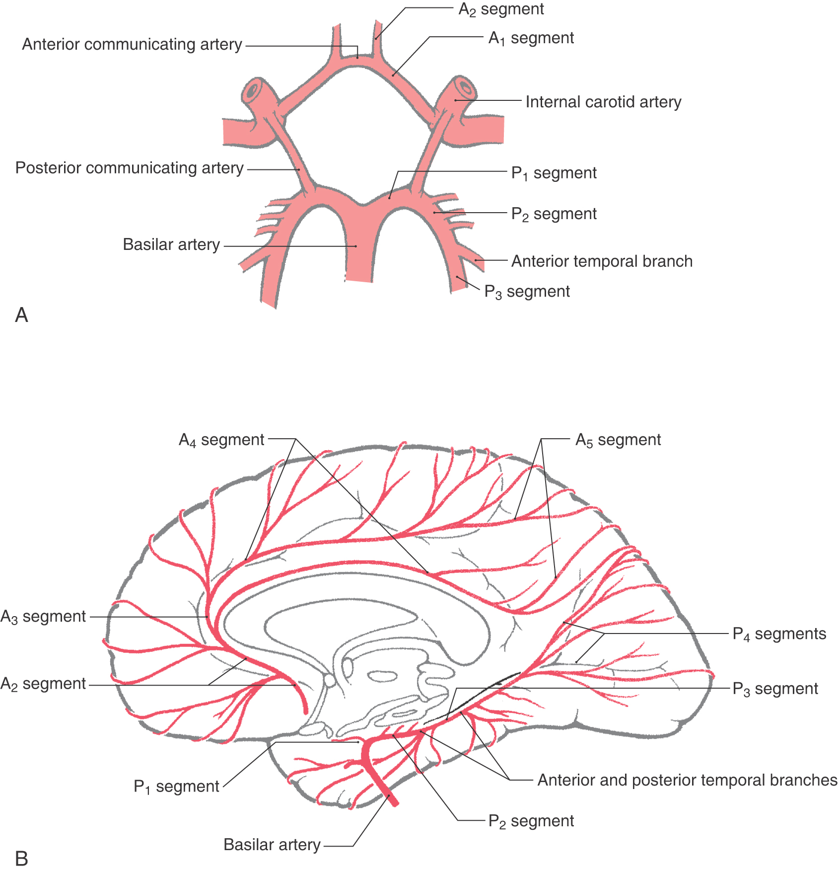 A Survey of the Cerebrovascular System | Clinical Gate