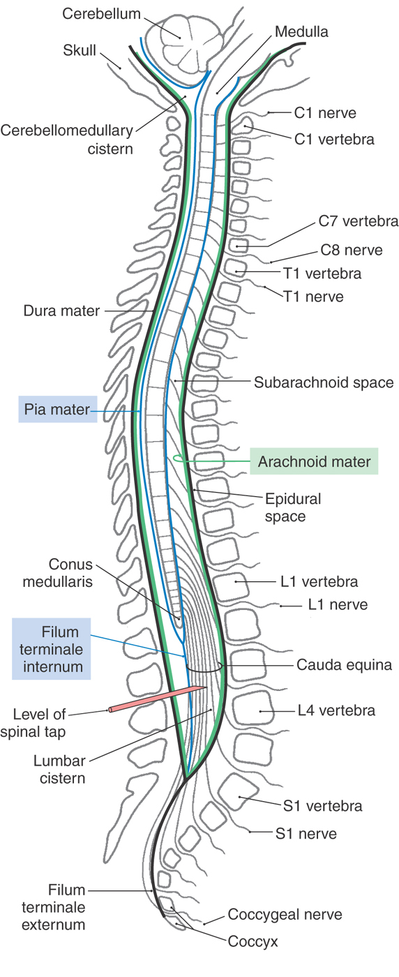 The Spinal Cord Clinical Gate