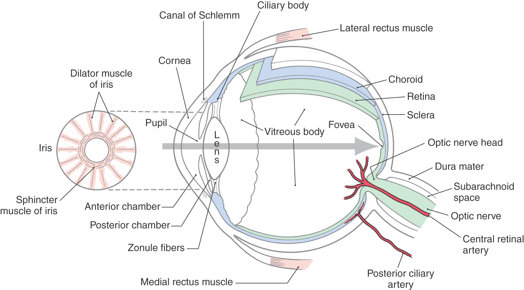 The visual system clinical gate image pooptronica Choice Image